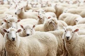 Tái sinh làn da bằng nhau thai cừu