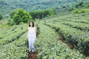 Lắng nghe chia sẻ của nữ nhà văn Phan Ý Yên về Sakura