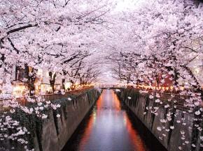 Có một Nhật Bản đẹp như thiên đường vào mùa hoa anh đào nở