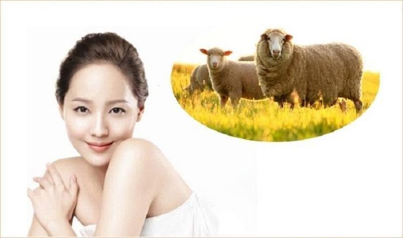Nhau thai cừu dưỡng da được sử dụng trong nhiều dòng mỹ phẩm cao cấp