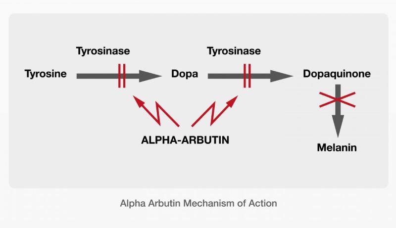 cơ chế hoạt động của Alpha Arbutin trong mỹ phẩm