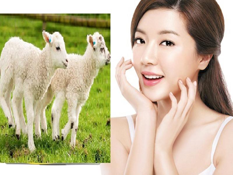 làn da không tuổi nhờ nhau thai cừu