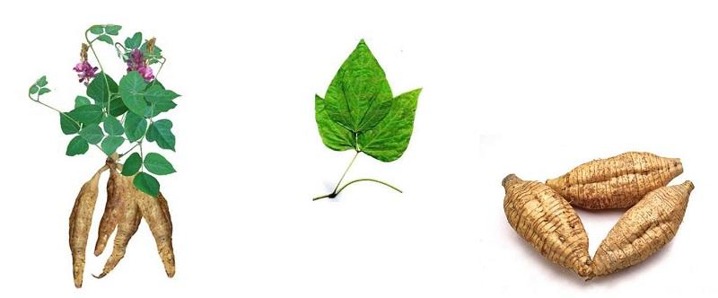sữa rửa mặt bổ sung tinh chất rễ cây hoàng cầm ngăn ngừa lão hóa chống ung thư