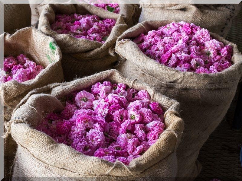toner bổ sung tinh chất hoa hồng hữu cơ từ nhật bản