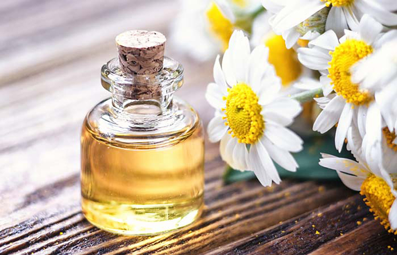 tinh dầu trong chiết xuất cúc la mã dưỡng da hiệu quả