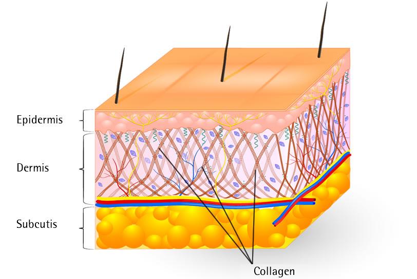 collagen-chong-lao-hoa-hinh1